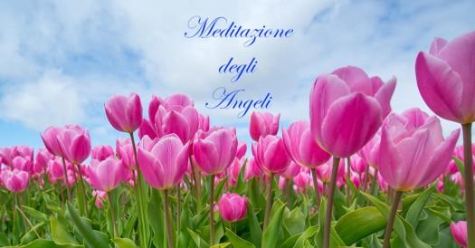 tulipani 1220x628